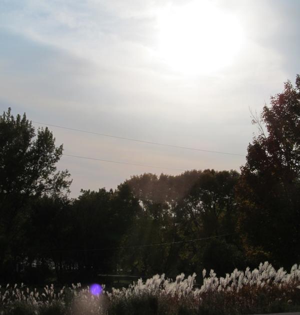 sunset deco grass