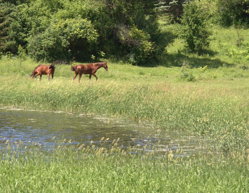 horses + the river
