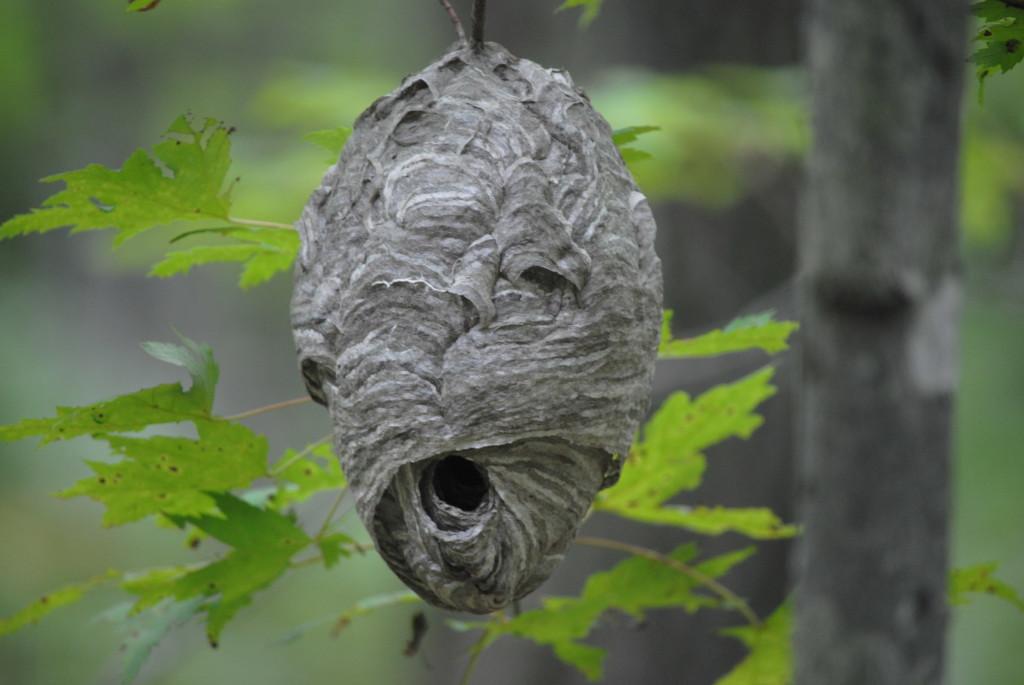 Banning State Park Nest